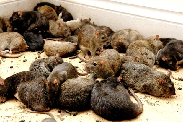 Lassa fever spreads to Gombe: 2 die, 5 in hospital