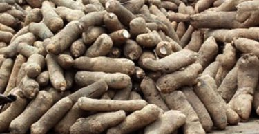 UK yam off-taker calls for decongestion of Apapa Port to ease export