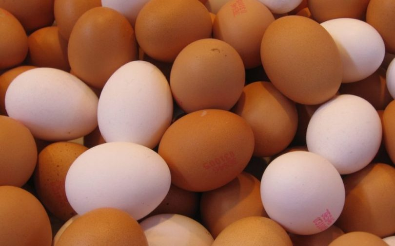 World Egg Day: NGO launches campaign for egg consumption in Kaduna State
