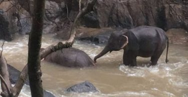 6 elephants drown at Thai waterfall, 2 others in care
