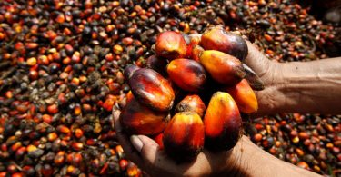 Palm oil producer, dealers decry palm oil importation