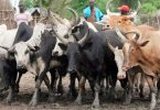 9 killed in rustlers' attack on village in South Sudan