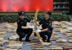 North China Customs seizes 63 ivory products