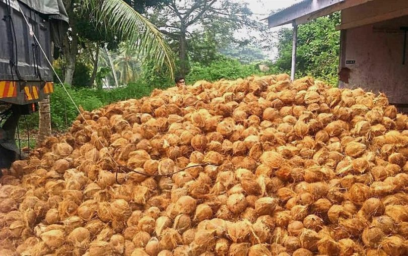NGO decries seizure of coconut by Customs in Badagry