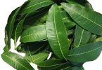 In the Lighter Mood: 10 Uses of Mango leaves!