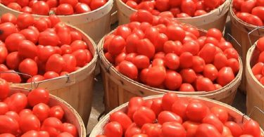 Prices of tomato, other vegetables, livestock drop in Lagos markets