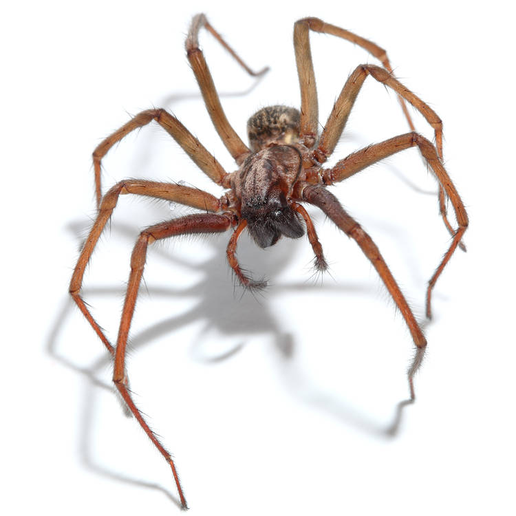 The Scary Science of the Spider!