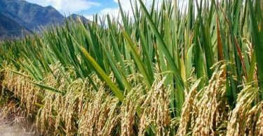 Plateau RIFAN celebrates border closure for boosting rice production