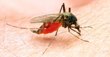 Nigerians spend over N300bn yearly on malaria treatment – Virologist