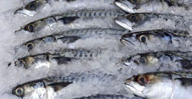 Nigeria may ban fish importation by 2022- FG