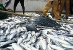 Ban on fish importation to save Nigeria over $1bn – Agropreneur