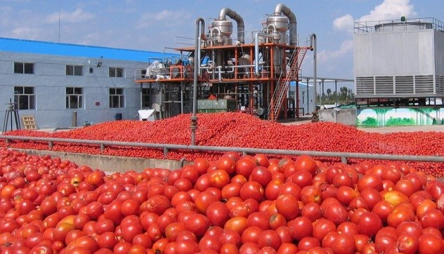 Dangote tomato company resumes production in Kano