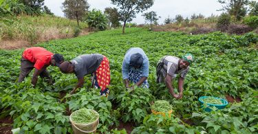 469 farmers in Ogun benefit from Anchor Borrowers' Programme inputs' distribution