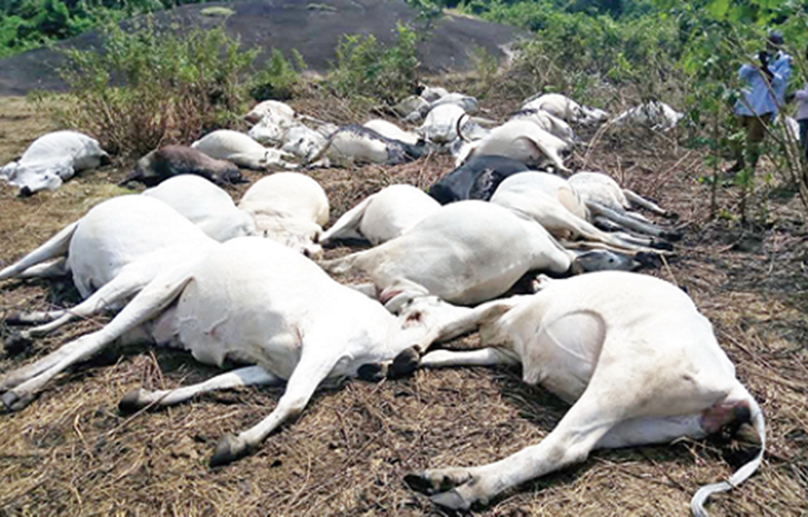 EKITI: Thunder strikes in Ikogosi, kills 15 cows