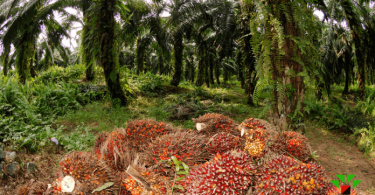 Okitipupa Oil Palm Company lost property worth N300m to hoodlums' attack – CEO