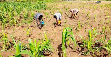 Food security: Farmers association advise FG on border reopening