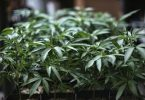 U.S. House passes historic bill to legalise marijuana