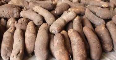 Council harps on emerging technologies to revolutionise yam production in Nigeria