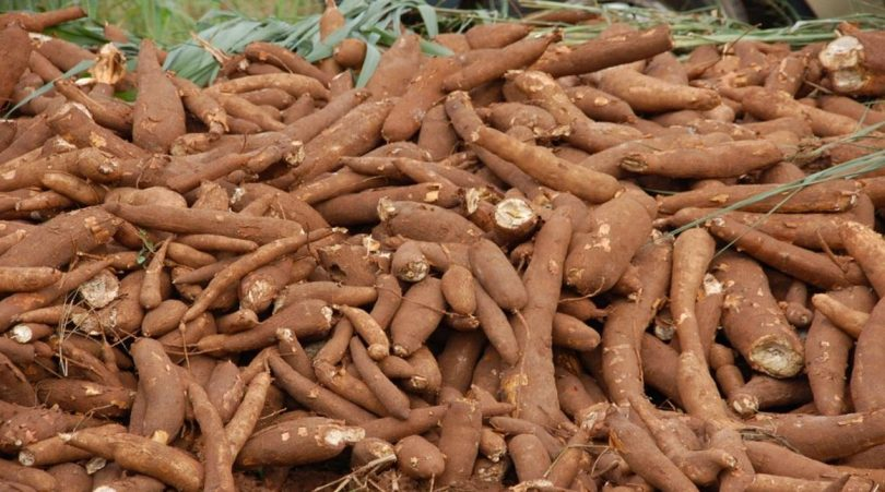 Nigeria now, World largest producer of cassava - FG
