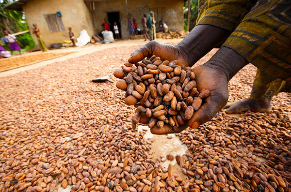 Cocoa, Plantain farmers appeal to Buhari over herders/farmers clashes