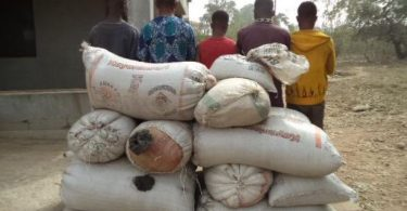 NDLEA seizes 1,292 kg of of illicit drugs, arrests 5 suspects in Ondo
