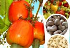 FG, U.S. sign MoU to boost cashew production in Nigeria