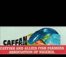 Farmers seek creation of fish markets in Oyo LGAs