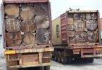 UNPROCESSED TIMBER: Customs intercepts 6 containers, arrests 2 in Rivers