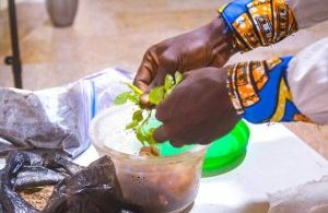 Organic agriculture combines best traditional practices with modern farming methods – Don